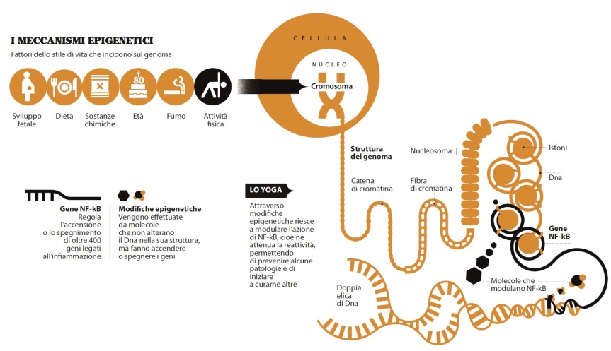 Meccanismi-epigenetici02